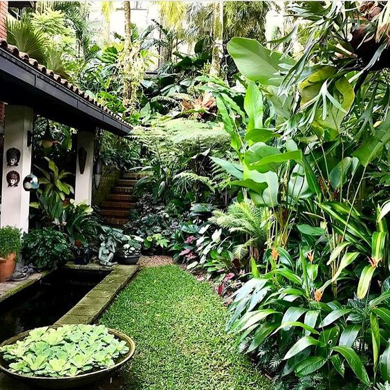 Tropical Backyard Garden