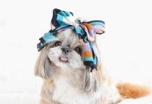 kuma The dog